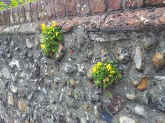 Plants growing out of a wall