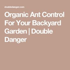 Organic Ant Control For Your Backyard Garden | Double Danger