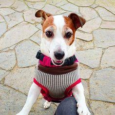 2016.11.23 こんにちワンฅ◤•(エ)•◥ฅ 公園に来たけど、寒いですぅ~(((寒゚Д゚寒))) #明日はもっと寒いらしい #ジャックラッセルテリア #JRT #犬 #dog #わんこ #愛犬 #family #love #cute #あい #じゃっくらぶ