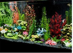 Google Image Result for http://z.about.com/w/experts/Freshwater-Aquarium-3216/2009/03/120-G-Tropical.jpg