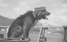 """""""Skunk""""— a Worthy Mascot """"Skunk"""", enjoying the fresh air on the fantail, estimated at some time around 1947. Skunk is said to have enjoyed the high points of both ship-board activities as well as liberty, nearly as much as his shipmates. USCGC Eastwind WAGB-279"""