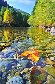 Kennedy River, Vancouver Island, Canada - the water is so clear and beautiful on Vancouver Island.  We walked maybe a block to a lake from my cousin's house. so nice!