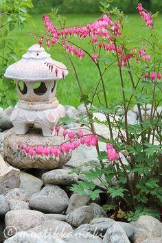 piha,puutarha,kukat,kukkia,pihan istutukset