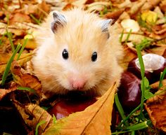 Hammie isn't overly fond of the Autumn cold