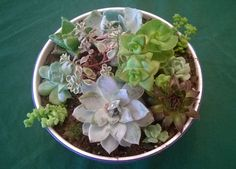 """Planting from May 2015 -- new plants, and pruned tops and offshoots from previous container. Various echeveria, semper vivum, portulaca, """"Jaws,"""" sedum, and a couple of kinds of crassula/String of Buttons (I think)."""