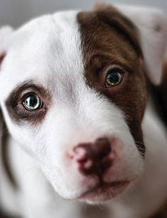 If I ever get a dog, I want it to look like this one. Such pretty eyes!