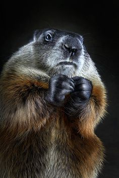 """I saw this, and all I could think was, gopher is signing that he wants """"More"""" crackers."""