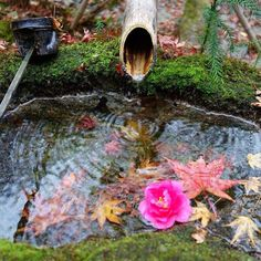 My favourite picture I took while in Japan. A little fountain in Hosenin. #Hosenin #Fountain #Zen #Kyoto #Japan  日本にいる間いっぱい写真撮ったけど、その中でこれが一番のお気に入り。#宝泉院 #京都 #日本