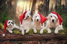 Not only humans enjoy holidays and traditions that come with the holiday spirit. Christmas is coming soon and one adorable dog called Mali is making the most out of the happiest holiday of all. Gabi Stickler, Mali's owner and best friend, made a beautiful series of Christmas and winter themed…