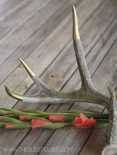DIY Gold Tipped Antlers | The Blissful Bee featured on Remodelaholic.com #gold #homedecor #diy @Remodelaholic .com