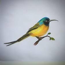 Resultado de imagem para ilustraçao passaros desenhos realistas