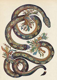 Beautiful Biology: Illustrations by Katie Scott – Inspiration Grid | Design Inspiration #illustration #drawing #art #artwork #biology #botanical #flora #fauna #science #illustrationinspiration #inspirationgrid