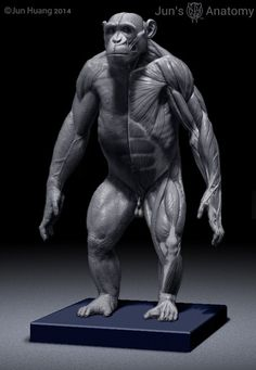 Chimpanzee Anatomy Model 1/6th scale – Jun's anatomy