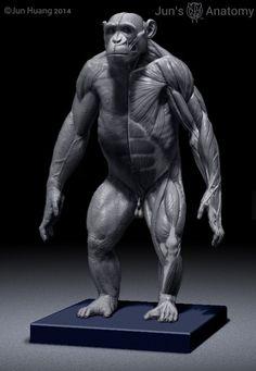 Chimpanzee Anatomy Model 1/6th scale – Jun's anatomy