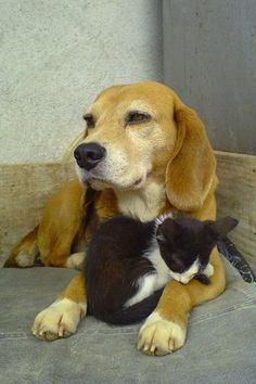 How to Introduce Your new Kitten to Your Dog   Cats and Dogs CAN Get Along