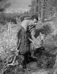 "The making of a diorama at the American Museum of Natural History. Rota, Alex J., ""Installing bobcat in Western Pine Forest Group, Walker Evans, Tim Walker, Herbert List, Mary Ellen Mark, Lee Friedlander, Karl Blossfeldt, William Wegman, Stephen Shore, August Sander"
