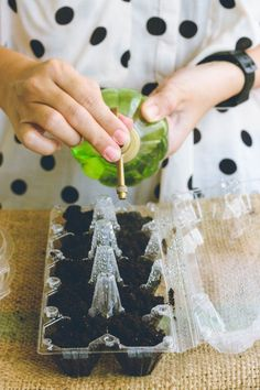 Learn // How to Sprout Microgreens atHome