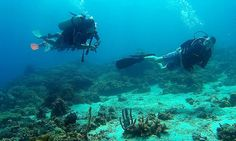 Pro Dive Davao takes you to the reefs situated around the Davao Gulf and Samal island. Come Scuba Diving in Davao Philippines Vacation, Water Sports Activities, Davao, Vacation Packages, Cebu, Daily Photo, Beach Resorts, Scuba Diving, Underwater