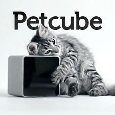 Petcube – Watch, Talk and Play With Your Pets From Your Smartphone.