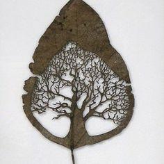 """ÁRBOL"" - 25 cm x 20 cm. Species: Catalpa Bignonioides"