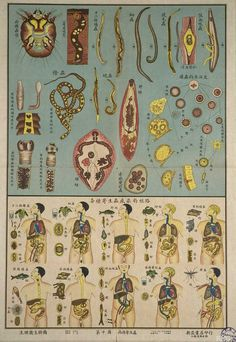 GAH!!!!!!!!!!!!!!!!!!!!!!!!!!!!!!    Parasitic Pathogens Chart, 1951