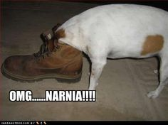Funny Dogs with Captions | Funny Dog Photos with Humorous Captions