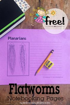 Flatworms Notebooking Pages • FREE printable • biology • homeschool science