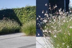Polybeton BR   Tuinarchitect Stefaan Willems - Green Architects Gaura, Flower Beds, Garden Inspiration, Tiny House, Sidewalk, Home And Garden, Wall Decor, Outdoor Decor, Gardening