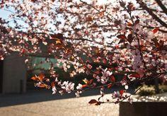 Flowers in bloom at J Vineyards & Winery.