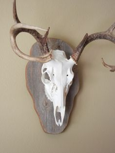 European mount, mounted on reclaimed barn wood - Bang Bang's has smaller antlers, not too overwhelming for his room.