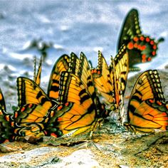 ~~ Butterfly Beach Party ~~
