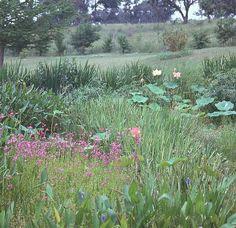 another charming bog garden.