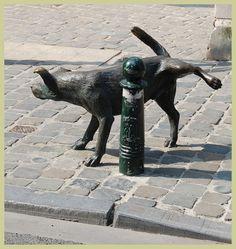 Pissaava koira
