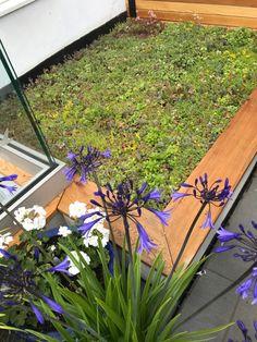 Sedum green roof Bespoke Design, Planting, Garden Design, Landscape, Building, Green, Flowers, Custom Design, Plants