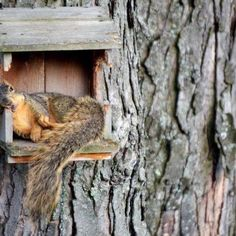 1000 Images About Bird And Squirrel Houses On Pinterest