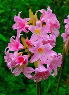 Unique Flowers, All Flowers, Exotic Flowers, Amazing Flowers, Beautiful Flowers, Flower Vases, Flower Arrangements, Container Flowers, Flower Pictures