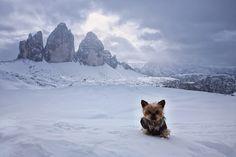Fotó: Szabó Ilona Hiking Dogs, Mountains, Travel, Animals, Nature, Viajes, Animales, Animaux, Destinations