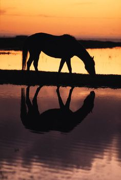 I can just imagine myself sat bareback upon this horse as if was my own, looking out at the beautiful sunset as it grazes. I just hope some day it will be!!