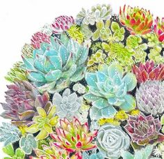 Succulent Garden Art Print 8x10 or 8x8 - Wall Decor, Kids Wall Art, Nursery Art