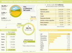 Cultivos de café, palma y caña suman 61,5% del área agroindustrial del país