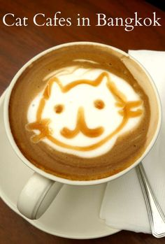 Cat Cafes in Bangkok,Thailand. Where to find the best cats and the best coffee.