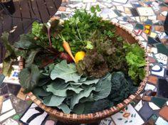 Hannah Thornton just shared this veggie harvest on Twitter #gardenchat