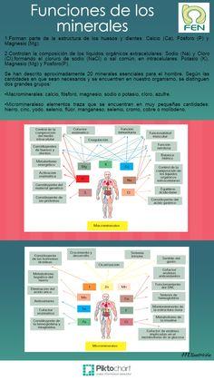 Principales funciones de los minerales  http://www.fen.org.es/blog/?p=569