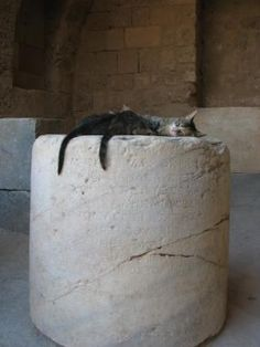 User Photo: Rhodes, ancient ruins, cat, cats, greek