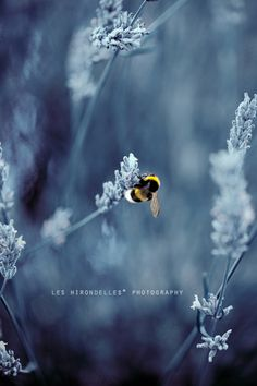 Behold the delicate side of nature:  captured by Laura Esse