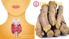 Tiroid Belirtisi ve Doğal Tedavi Yöntemi tiroid bezleri tiroid hormonu, tsh hormonu, tiroid bezi, tiroid tedavisi, tiroide ne iyi gelir, tiroid tedavisi