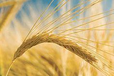 Gewerbemühlen Kombi - Getreidemühlen für Bäckereien - Osttiroler Getreidemühlen