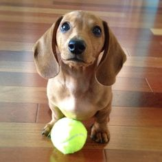 can we pleaseee play fetch?