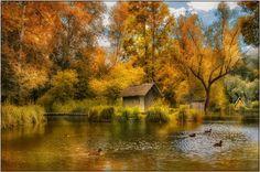 Autumn scenery in a vivid mood.