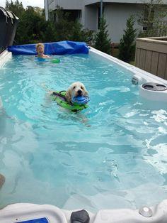 Photo: Ben's loving his new Hydropool Swim Spa! Under Decks, Pool Ideas, Spas, Labrador Retriever, Swimming, Animals, Labrador Retrievers, Swim, Animales